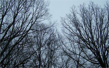 bare_trees