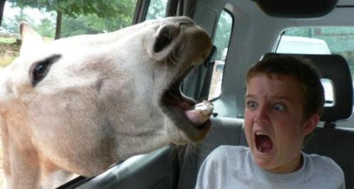 Horses_Bite