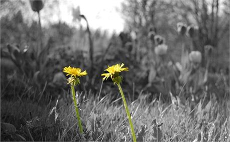 Two_Flowers_by_Tim_Parfalt_Creationswap