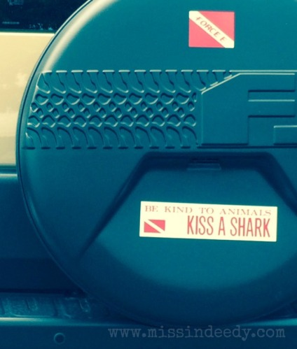 kiss_a_shark_missindeedy