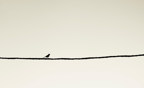 bird_on_wire_missindeedy