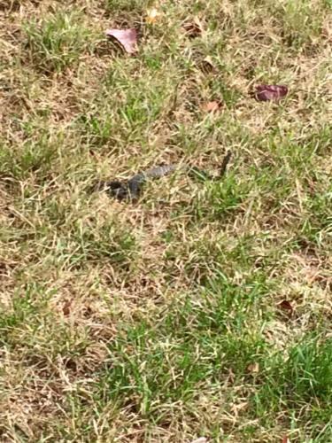 Snakes_Missindeedy